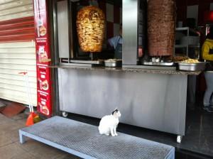 un kebab, va rog! :)